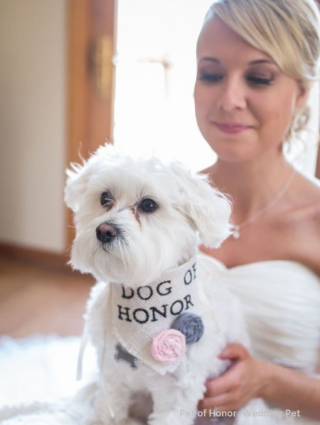 pet-of-honor-wedding-pet-service